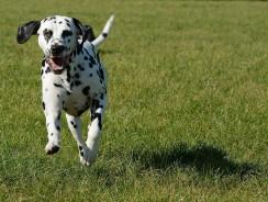Comment retrouver son chien par GPS ?
