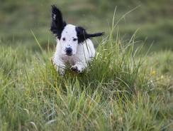 Comment ajouter un chien sur un collier GPS Garmin ?