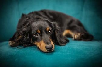 Comment choisir un canapé pour son chien ?