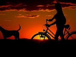 Comment choisir une remorque vélo pour chien ?