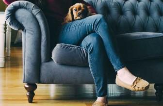 Comment empêcher son chien de monter sur le canapé ?