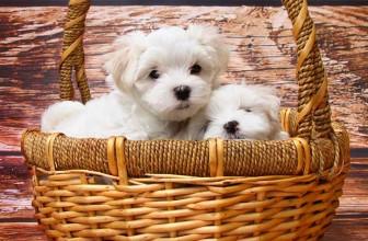 Conseils pour bien choisir son panier pour chien
