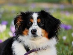 Couche pour chien : les avantages