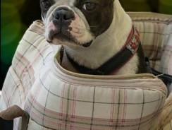 Comment habituer son chien au sac de transport pour chien?