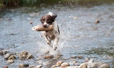 Choisir un chien qui aime l'eau