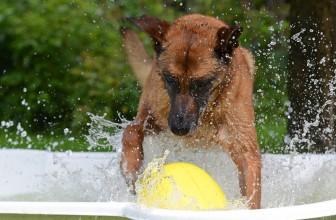 Comment choisir une piscine pour chien?