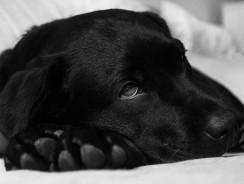 Empoisonnement du chien : le top 8 des produits dangereux