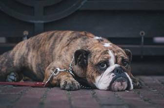 Enclos pour chien : quelle dimension choisir ?