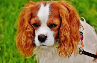 Peut-on enterrer son chien dans son jardin ?