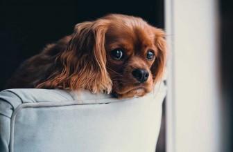 Est-ce bien d'autoriser le canapé à son chien ?