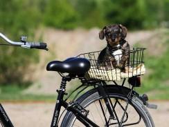 Faire du vélo avec son chien : les solutions