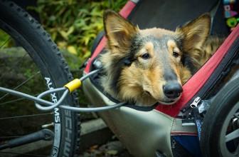 Comment fixer une remorque pour chien sur un vélo ?