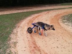 Meilleur fauteuil roulant pour chien en 2021