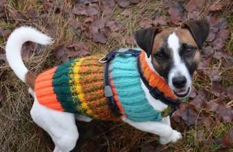 Manteau pour chien avec harnais intégré : avantages et fonctionnement