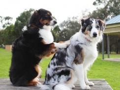 Le massage du chien et ses bienfaits