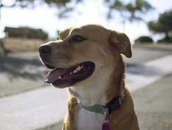 Meilleur collier anti-fugue pour chien 2021