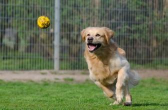 Meilleur enclos pour chien 2021