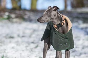 Meilleur manteau pour chien 2021