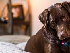 Meilleurs paniers pour chien 2021