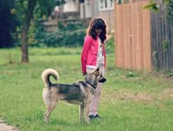 Meilleure clôture électrique chien 2021