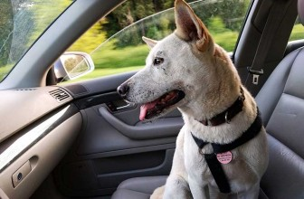 Meilleure housse de siège auto pour chien 2021
