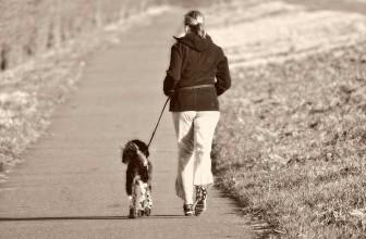 Meilleure laisse pour chien 2021