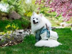 Meilleure poussette pour chien 2020