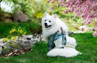 Meilleure poussette pour chien 2021