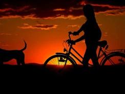 Meilleure remorque vélo pour chien 2021