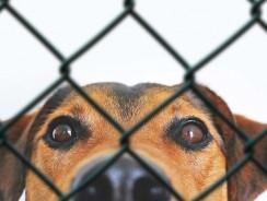 Quel produit désinfectant non nocif pour nettoyer enclos pour chien ?