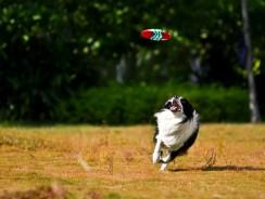 Quelle race de chien pour courir ?