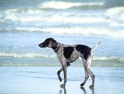 À quelle distance peut-on retrouver son chien avec un collier gps ?
