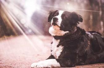 Comment protéger son chien du soleil ?