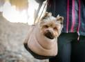 Meilleur sac à dos pour chien 2021
