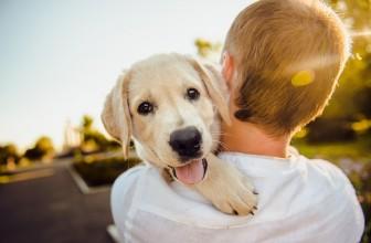 Comment savoir si un chien est LOF ?