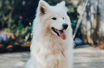 Les solutions contre les fugues des chiens
