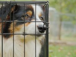 Quelle taille de cage choisir pour mon chien ?
