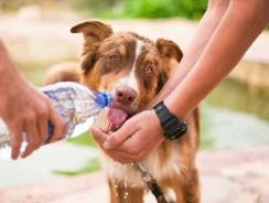 Tapis pour chien rafraîchissant : les avantages
