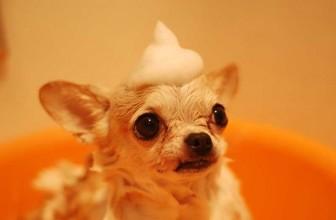 Quelle technique utiliser pour tondre son chien ?