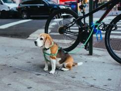 Utiliser une remorque vélo pour chien : nos conseils sécurité